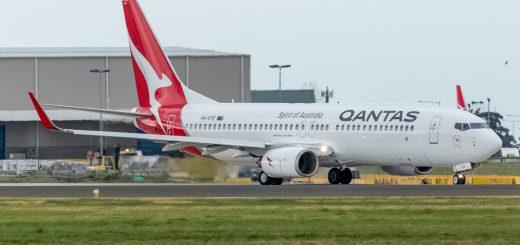 Qantas Silver Roo